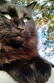 hannahs-cat_forweb